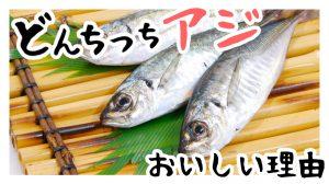 浜田のどんちっちアジがおいしい理由!どんちっちアジは普通の味よりも健康に良い!?