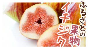浜田のふるさとの果物「イチジク」!ゼリーやジャムとして食べられています!