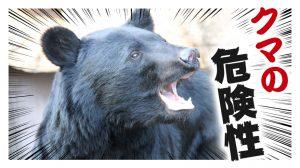 クマの危険性を知ろう!島根県ではツキノワグマは絶滅の危機!?